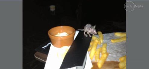 Hoyts rats